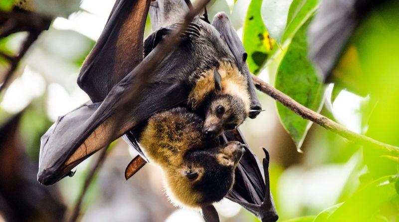 Sortie faune à Val-au-Perche le 22 août