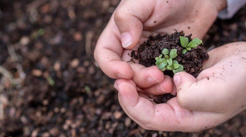 Jardiniers : la vente de semences paysannes est autorisée
